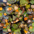 Colorful autumnal leaves float in still lake water — Foto Stock