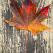 Colorful autumnal maple leaf lays on dark brown wooden surface. Macro photo — Stock Photo