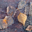 Autumnal leaves with frost lay on wooden table in cold morning park — ストック写真