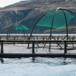 Norwegian fish farm cages for salmon growing in fjord — Stock Photo