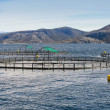 Norwegian fish farm with round cages for salmon growing in fjord — Stock Photo