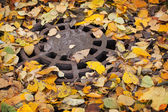 Round sewer manhole with autumnal leaves in the park — Stockfoto