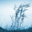 Blue coastal landscape with reed and lake water in foggy morning — Stock Photo