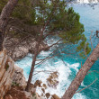 Coastal landscape. Pine trees grow on the rocks. Adriatic Sea — Stock Photo