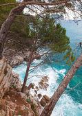 прибрежный пейзаж. сосны растут на скалах. адриатическое море — Стоковое фото