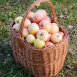 Colorful apples lay in the basket on grass — Stock Photo