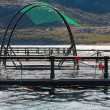Fish farm cages for salmon growing in Norwegian sea — Foto de Stock