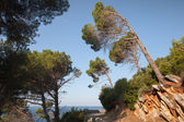 Coastal road with slope pine trees growing on mountains — ストック写真
