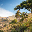 Summer mountain landscape with trees. Montenegro — Stock Photo