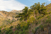 Mountain landscape with green trees and grass. Montenegro — Stockfoto