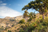 Summer mountain landscape with trees. Montenegro — Stockfoto
