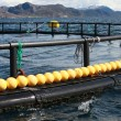 Fragment of fish farm for salmon growing in Norwegian Sea — ストック写真