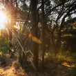 Morning sun is shining in the dark forest — Stock Photo #38948757