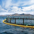 Round fish farm cage in Norwegian Sea — Stock Photo