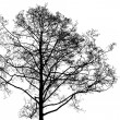 Stock Photo: Black leafless tree photo silhouette on white background