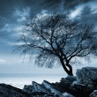 Stock Photo: Leafless tree silhouette on rocky secoast. Monochrome photo