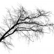 Black silhouette of tilt leafless tree isolated on white background — Stock Photo