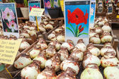 AMSTERDAM, NETHERLANDS - MARCH 19, 2014: Big decorative flower bulbs with prices on the counter of the biggest floating market in Amsterdam — Stock Photo