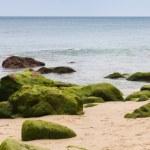 Atlantic ocean coast with green stones in algae. Tangier, Morocc — Stock Photo #44329341