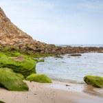 Atlantic ocean coast with sand and stones in algae. Tangier, Mor — Stock Photo #44329345
