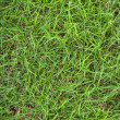 Fresh green grass close up background photo texture — Stock Photo