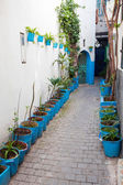 Narrow street with houseplants in Medina. Tangier, Morocco — Stock Photo