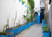 Narrow street with houseplants in old Medina. Tangier, Morocco — Stock Photo