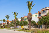 Street with palms along the roadside in Tangier town, Morocco — Stock Photo