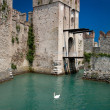 Swan lake (Sirmione) — Stock Photo