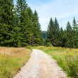 Walking trail — Stock Photo