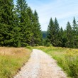 Stock Photo: Walking trail