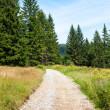 Walking trail — Stock Photo #14282165