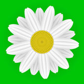 Daisy flower — Stock Vector