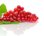 Red currant - close-up on white background — Stock Photo