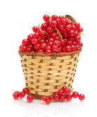 Red currant in a basket on a white background — Stock Photo