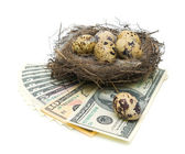 Eggs in the nest and money on a white background — Stock Photo