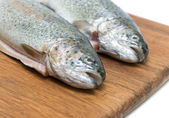 Trout fish close up — Stockfoto