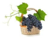 Ripe grapes with leaves in a basket on a white background — Stock Photo