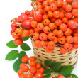 Red rowan berries and rose hips in a wicker basket — Stock Photo