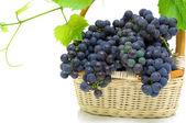 Uvas maduras en una cesta en un fondo blanco — Foto de Stock