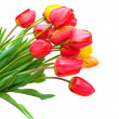 Bouquet of tulips isolated on white background. vertical photo. — Stock Photo #22788860