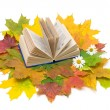 Stock Photo: Book and autumn leaves on a white background. Top view.