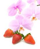 Fresas y un acercamiento a rama floreciente orquídea de espalda blanca — Foto de Stock