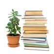 Books and green plant isolated on white background — Stock Photo