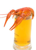 Glass of beer and boiled crawfish closeup on white background — Fotografia Stock