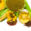 Ears of corn, sunflower and oil closeup — Stock Photo