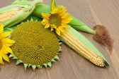 Flores de girasol y maíz en la mazorca en un tablero de madera — Foto de Stock