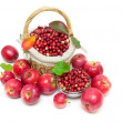 Ripe apples and cranberries isolated on white background — Stock Photo #31123679
