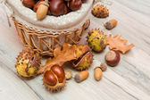 Chestnuts and acorns in a wicker basket. horizontal photo — Stock Photo
