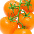 Bunch of tomatoes on a white background close-up — Stock Photo